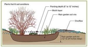 Rain Garden picture taken from the Massachusetts Watershed Coalition Rain Garden Guide